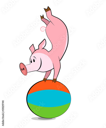Pig exercising with a pilates ball