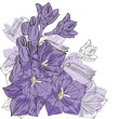 purple bells on white background