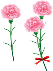 母の日 カーネーション ピンク
