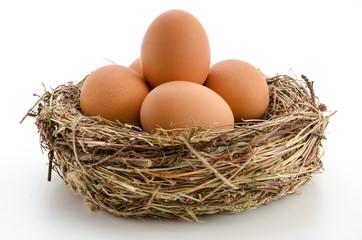Braune Eier im Nest