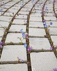 pavage fleuri
