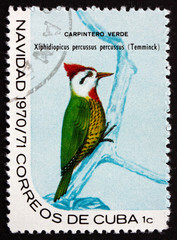 Postage stamp Cuba 1970 Cuban Green Woodpecker, Bird
