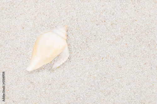 Neat seashell on the sandy beach