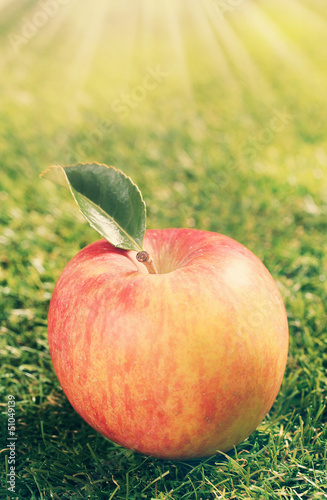 Single red apple on green grass