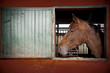 Obrazy na płótnie, fototapety, zdjęcia, fotoobrazy drukowane : ritratto di cavallo