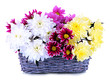 Bouquet of beautiful chrysanthemums in wicker basket isolated
