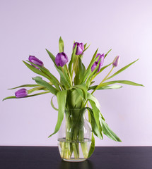 Lilac or purple tulips in vase