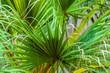 Closeup photo of a palm tree