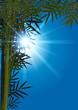 Feuilles_Bambou_Rayons de Soleil