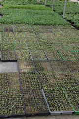 cultivation in a greenhouse for seedlings to plant on the garden