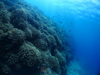 underwater of southern island