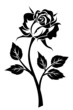 Obrazy na płótnie, fototapety, zdjęcia, fotoobrazy drukowane : Black silhouette of rose with stem. Vector illustration.