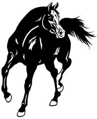 arabian horse black white