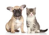 Puppy and kitten - Fine Art prints
