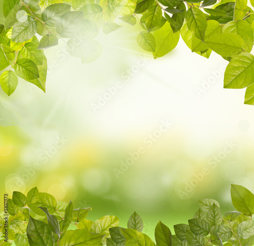 canvas print picture green leaves morning