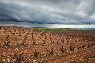 vineyards in La Rioja, Spain