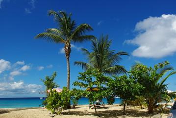 Palmenstrand Barbados