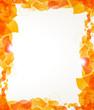 Orange petals frame
