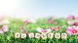 Frühlin Blumenwiese 2