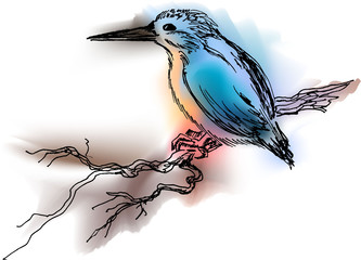 color kingfisher