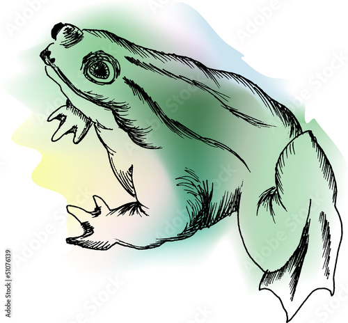 Vector color frog on the white background