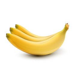 Vector bananas on white background