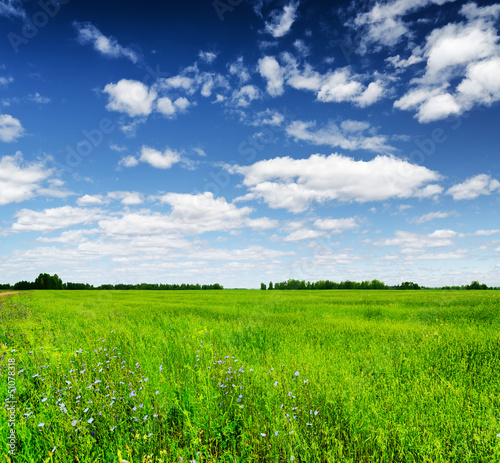 Fototapeten,liegewiese,grün,gras,feld