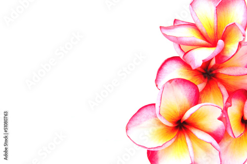Plumeria flowers isolated on white