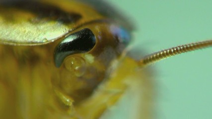 Cockroach in the kitchen macro