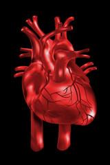 Herz, Anatomie/ Illustration rot