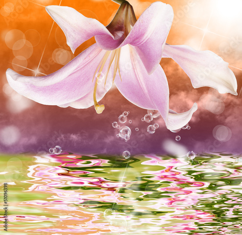 Tropical sundown and exotic water beautiful orchid