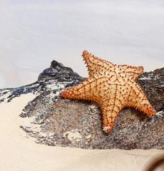 Starfish on a tropical beach.