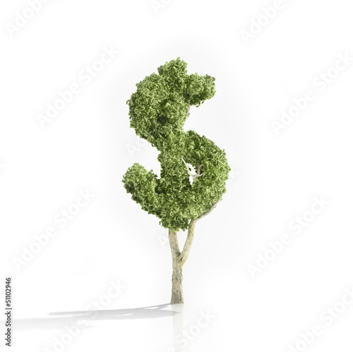 Dollar shaped tree