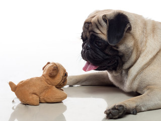 pug and toy 1