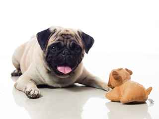 pug and toy 2