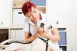 Tierärztin bei Untersuchung von Hund