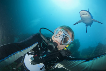 A scuba diver being attacked by a grey shark