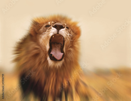 Zdjęcia na płótnie, fototapety na wymiar, obrazy na ścianę : Lion