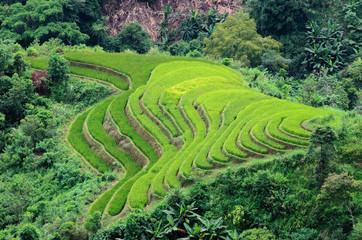 Hoang Su Phi terraced fields, Ha Giang province, Vietnam