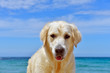 dog on the beach with blue sky