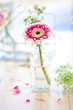 canvas print picture - Fresh flowers in little glass bottles