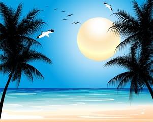 Tropical Exotic Wild Beach-Spiaggia Tropicale Deserta