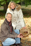 Middle-aged couple gathering chestnuts poster