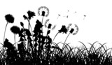 silhouettes of dandelions in grass isolated on white - 51113743