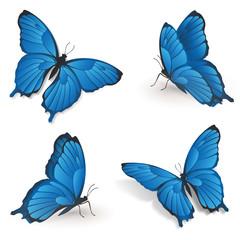 Blaue Schmetterlinge - 4 Positionen