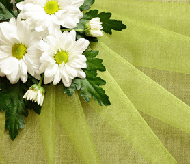 Daisies on organza