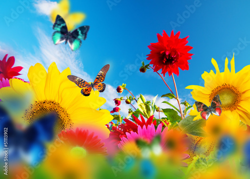 Sunny garden of flowers and butterflies. Colors of spring summer