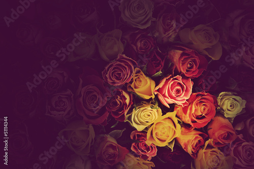 Colorful roses background. Beautiful, high quality