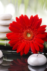 fiore rosso con pietre e candela