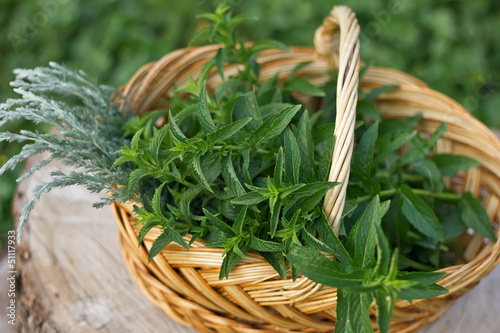 Fresh mint and artemisia in bucket on wooden background